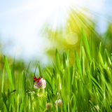 Beautiful summer backgrounds. With green grass, flowers and butterfly Royalty Free Stock Images