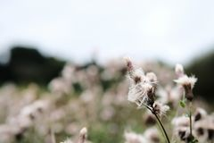 A warm summer and flower on the road side. A beautiful summer breeze with a magical moment looking at weed flower blooming. A gentle wind blows to get flower royalty free stock photography
