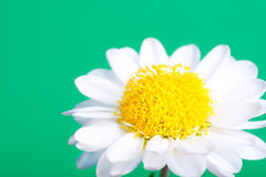 Beautiful Summer Camomile flower, background Stock Photo