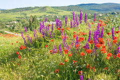 Beautiful summer country landscape with flowers . Royalty Free Stock Photos