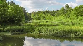 Beautiful Summer Creek Landscape w Insects stock video