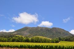 Summer weather vineyards in South Africa Stock Photo