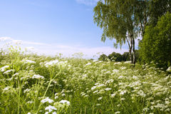 Beautiful summer day. The midland nature. Royalty Free Stock Images