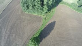 Beautiful summer end sowed farmland fields in morning sunlight and tree, aerial view stock video footage
