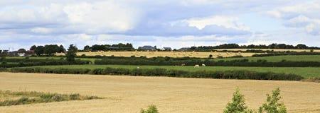 Beautiful summer farmland in countryside of Stock Image