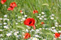 Beautiful summer field. Stock Photography