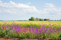 Beautiful summer field. stock image