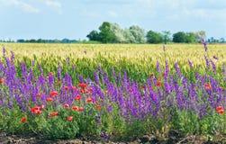 Beautiful summer field. stock photo