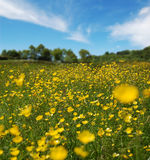 Beautiful Summer Field Royalty Free Stock Images