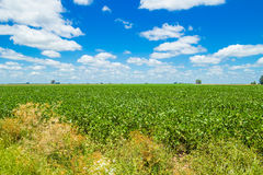 Beautiful summer field Royalty Free Stock Photos