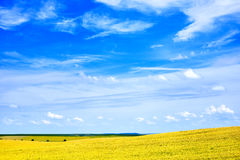 Beautiful summer field landscape Royalty Free Stock Photos