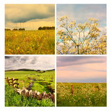 Beautiful summer in the fields, collage, Scotland, UK Royalty Free Stock Photo