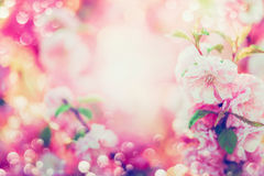 Beautiful summer floral background with pink blooming , sun shine. And bokeh Royalty Free Stock Photo
