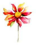Beautiful Summer flower Stock Image