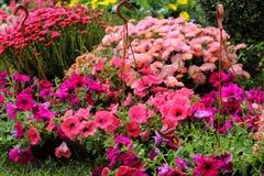 Beautiful summer flowers Stock Photo