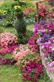 Beautiful summer flowers Stock Photos