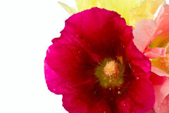 Beautiful summer flowers Royalty Free Stock Photography