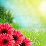 Beautiful summer flowers background. With copy space Stock Photos