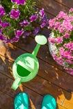 Beautiful summer flowers in flowerpots in garden. chrysanthemum,. Petunia, watering can Royalty Free Stock Images
