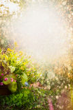 Beautiful summer flowers garden nature background with calendula  flowerbed Stock Photography