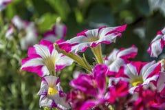 Beautiful flowers. Beautiful summer flowers macro shoot Stock Photos