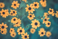 Summer flowers banner. Yellow flowers under sunlight, happy moody blooming close-up stock photo