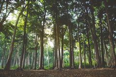 Beautiful summer forest with different trees Stock Photo