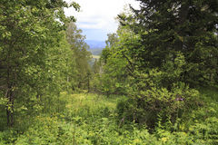 Beautiful Summer Forest In Mount Small Sinyuha. Royalty Free Stock Images