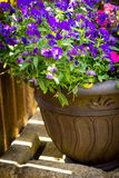 Beautiful, Summer garden with amazing blossom in big flowerpots. Close up stock images