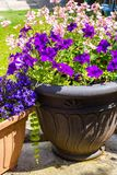 Beautiful, Summer garden with amazing blossom in big flowerpots. On a sunny day stock photo