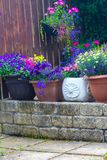Beautiful, Summer garden with amazing blossom in big flowerpots. On a sunny day royalty free stock photography