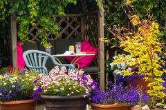 Beautiful, Summer garden with amazing blossom in big flowerpots. M. Nemesis, daisies, blue lobelia stock image
