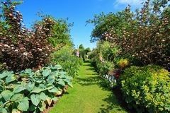 Beautiful summer garden Stock Photography