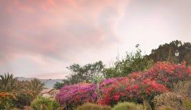 Beautiful summer garden Stock Photos