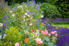 Beautiful, summer garden with lavender and roses Stock Photo