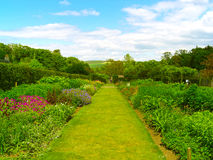 Beautiful summer garden Royalty Free Stock Photography