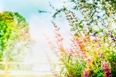 Beautiful  summer garden or park background with pink flowers and sunlight,  outdoor nature Royalty Free Stock Photography