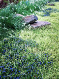 Beautiful summer garden with stones and blue flowers Royalty Free Stock Photos