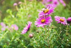 Beautiful summer green background with violet flowers Royalty Free Stock Image
