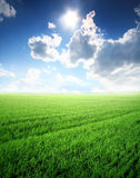 Beautiful summer landscape. With sunlight and green lawn Royalty Free Stock Images