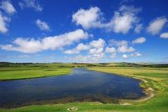 Beautiful summer landscape Stock Images