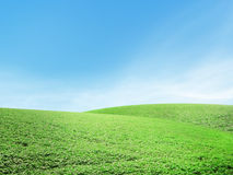 Beautiful summer landscape Royalty Free Stock Photo