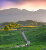 Beautiful summer landscape Stock Images