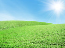 Beautiful summer landscape Stock Image