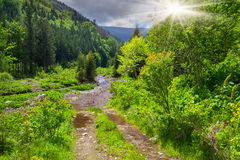 Beautiful summer landscape Stock Photography