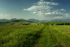 Beautiful summer landscape Royalty Free Stock Image
