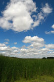 Beautiful summer landscape. With  pond Royalty Free Stock Photos