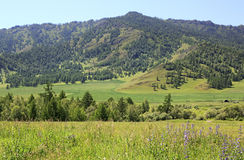 Beautiful summer landscape of Altai Mountains Royalty Free Stock Images