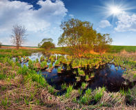 Beautiful summer landscape on backwater Royalty Free Stock Images