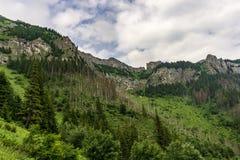 Beautiful summer landscape in the Belianske Tatry Mountains. Slovakia. Beautiful summer landscape in the Belianske Tatry Mountains. Slovakia stock photography